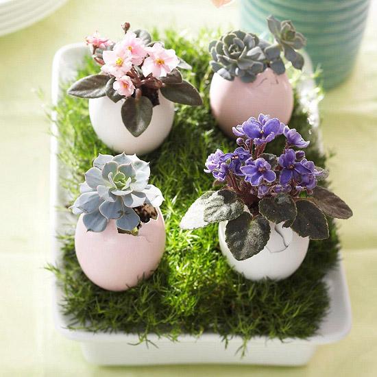 Egg-Shell-Succulents-planter