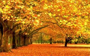 fall-wallpaper-hd-free