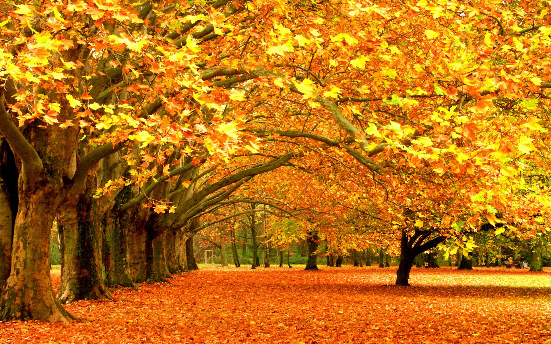 Change Like The Autumn Leaves